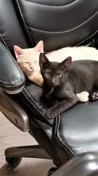 Cats snuggling together on chair