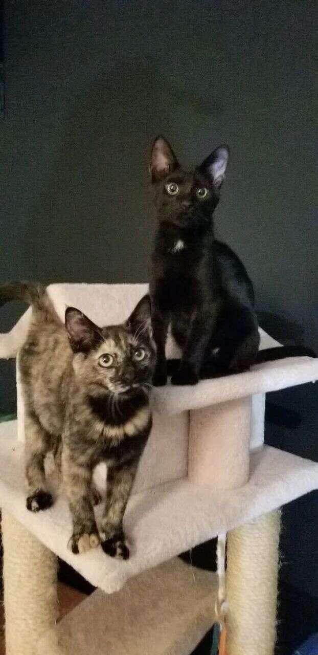 Kittens sitting on the same cat tree