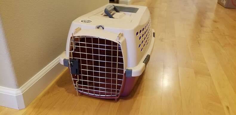 Cat carrier sitting on ground