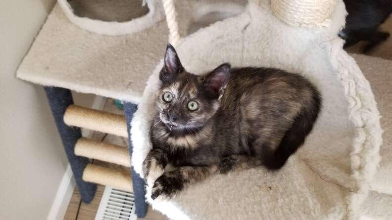 Kitten sitting in cat tree