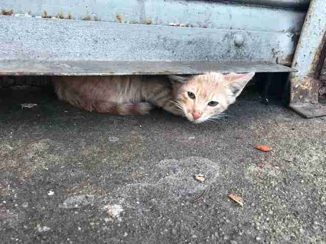 cat hiding in crawl space