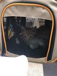 cat hiding in crawl space