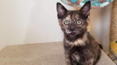 Kitten sitting on cat tree
