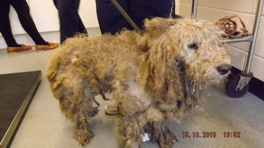 matted dogs