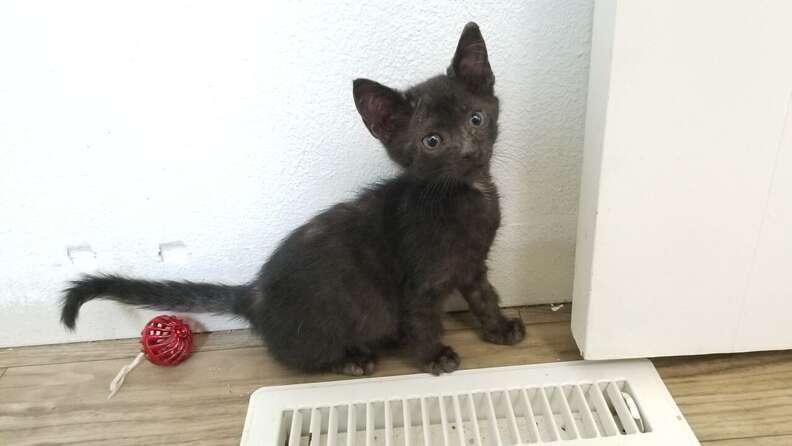 Kitten sitting on top of carrier