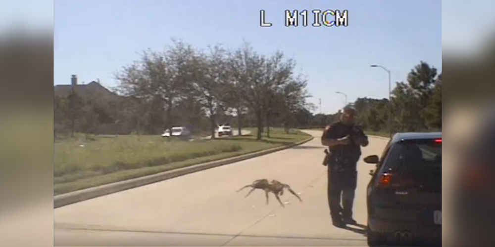 Dash Cam Video Appears To Show Dog-Sized Spider Ambushing A Cop