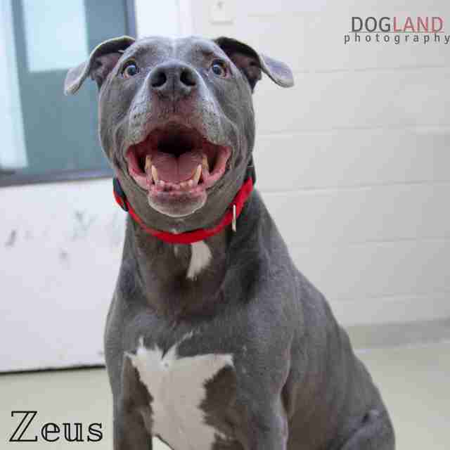 King Zeus the shelter dog looks for a forever family