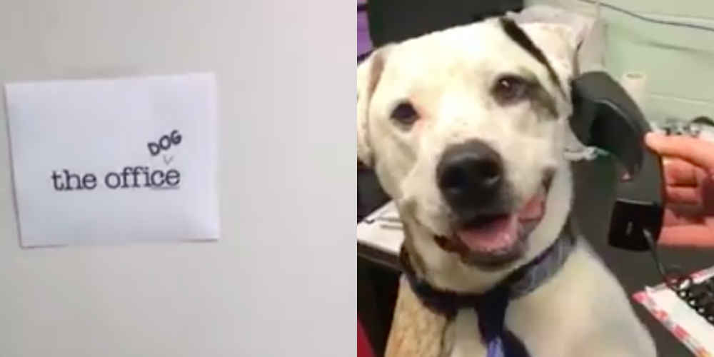 Dog Gets His Own 'Office' Parody To Help Him Find A Home