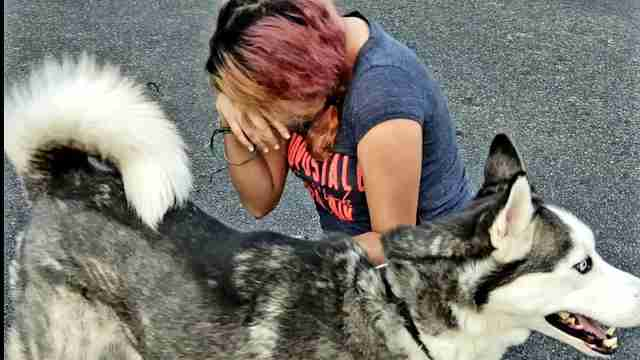 Stolen husky reuniting with owner