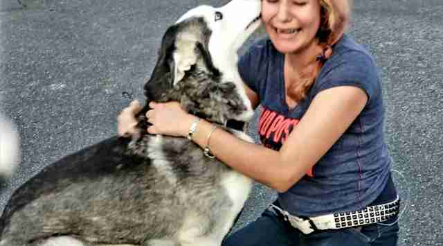 Husky reuniting with owner