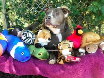 Dog with several dog toys
