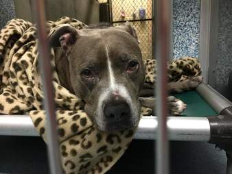 Sad looking dog inside shelter kennel