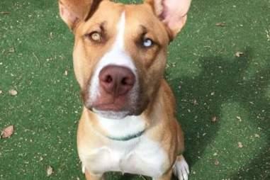 Binx the homeless dog at the Animal Welfare League