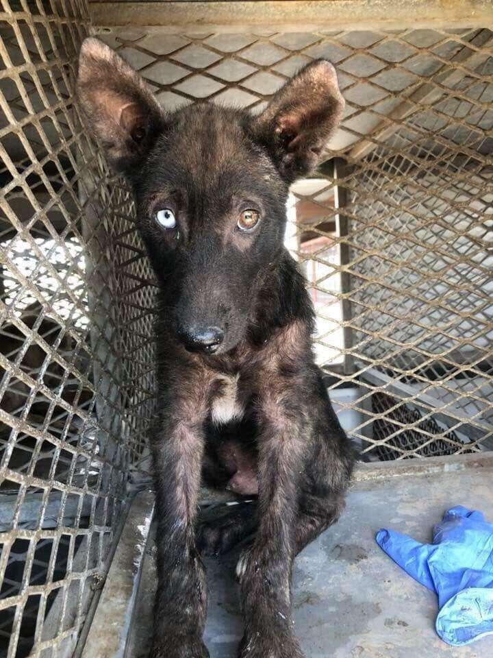 Rough looking dog inside shelter kennel