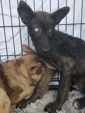 Scared dogs cowering in kennel