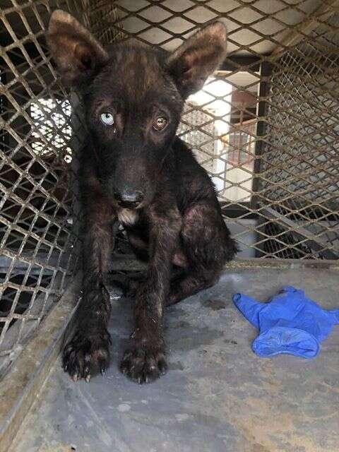 Rough looking shelter dog inside kennel