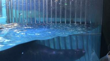 Sea lion inside tiny tank