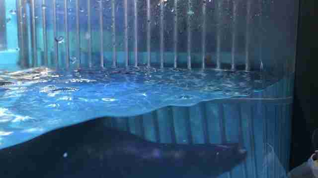 Sea lion inside tiny tank