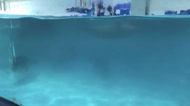 Poor water quality in seal tank