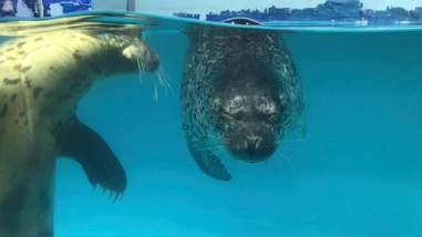 Seals squinting in tank with poor water quality