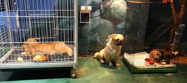 Animals at pet exhibit