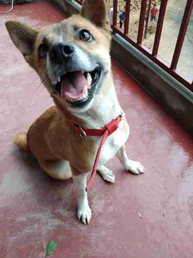 Rescued dog with smiling face