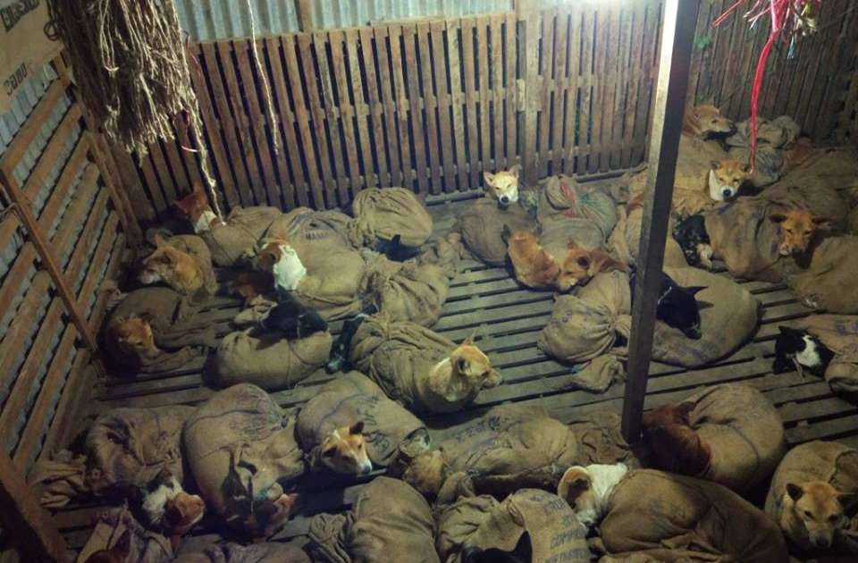 People Find Strange Room Packed With Dozens Of Dogs In Bags