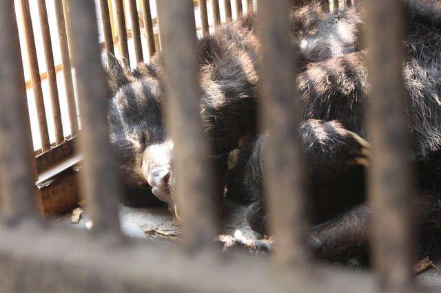 Bear locked in tiny cage at zoo