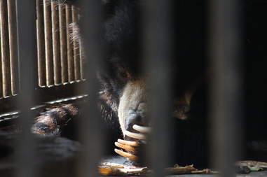 Bear inside tiny cage at zoo
