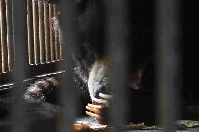 Bear inside tiny cage at zoo