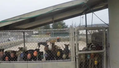 A turnout pen at Orange Park greyhound racetrack in Florida