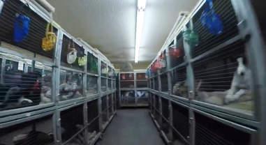 A greyhound kennel at Sanford Orlando Kennel Club