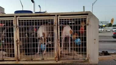 A greyhound hauler in Sarasota, Florida
