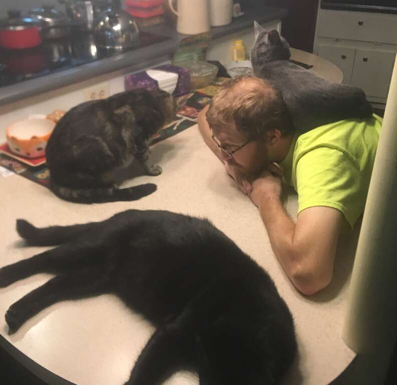 6 rescue cats sleep together at their forever home