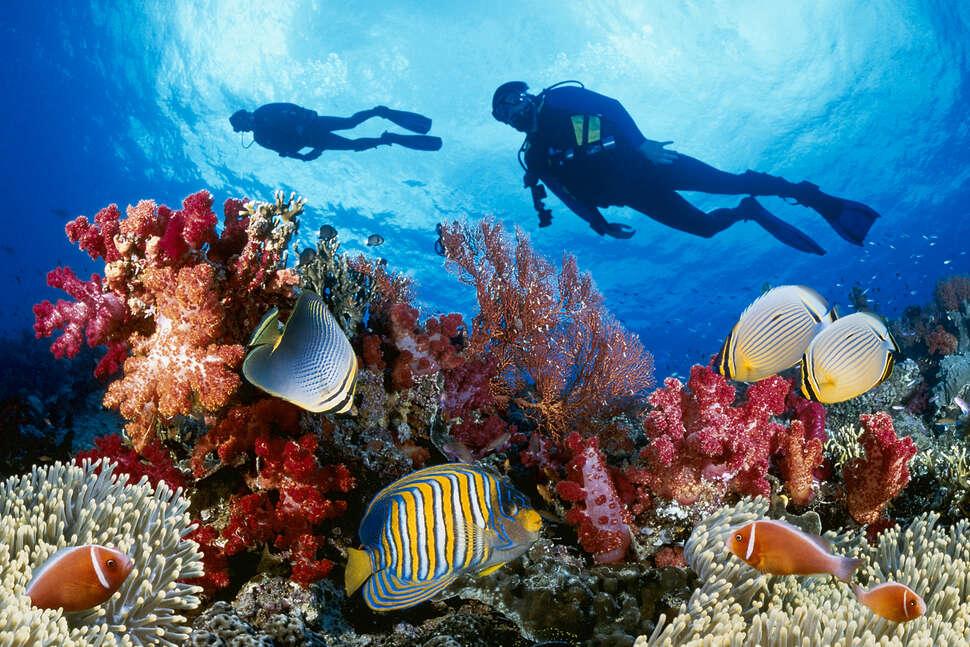 Best Places To Scuba Dive Around The World: Dive Sites
