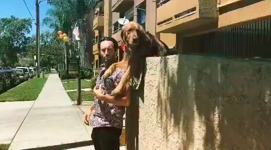 dog throws ball over wall to get attention