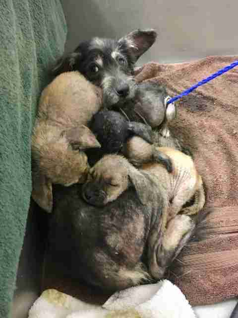 Sick Mama Dog And Puppies Waited In Shelter For Someone To Finally Notice Them