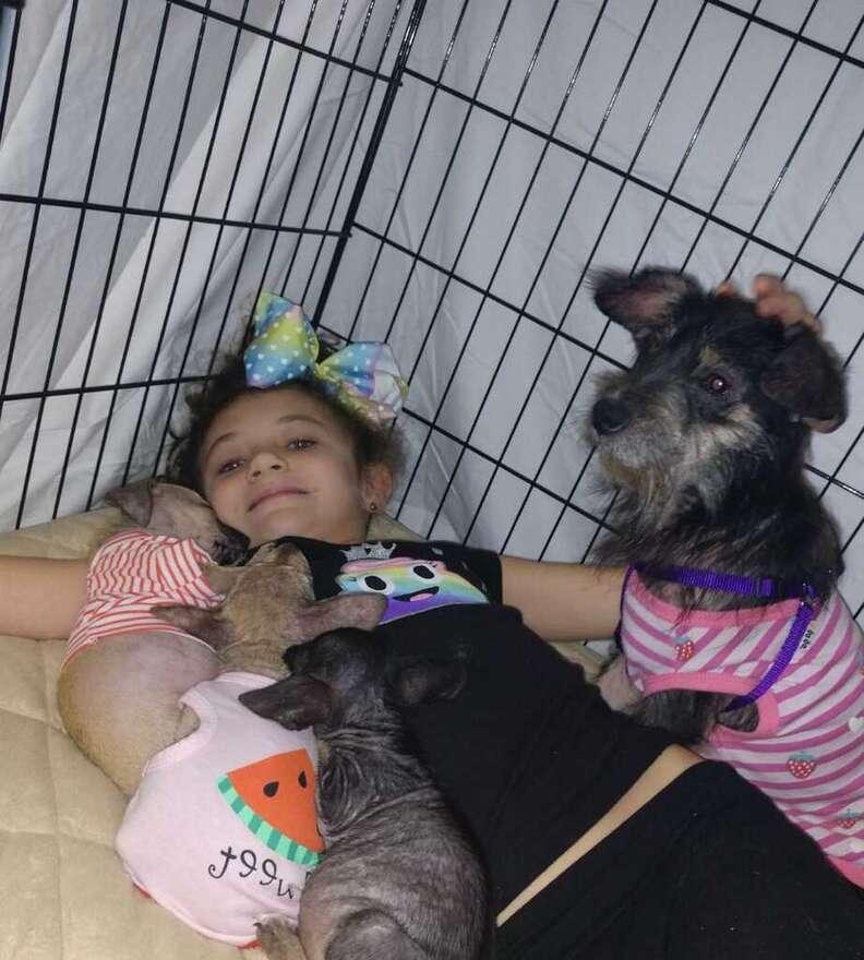 mama shelter dog and puppies