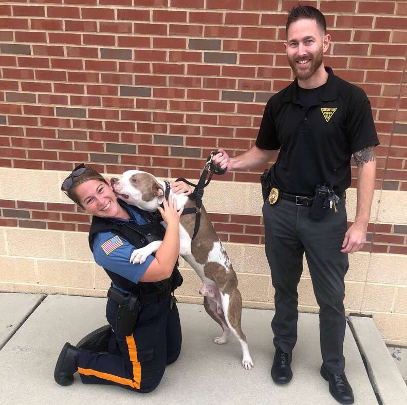 dog chained to tree rescued