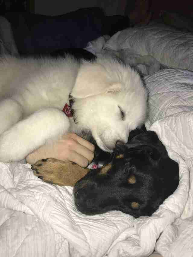 Dogs cuddling together on the bed