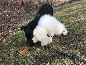 Dogs playing together in yard