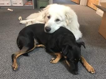 Dogs cuddling together on floor