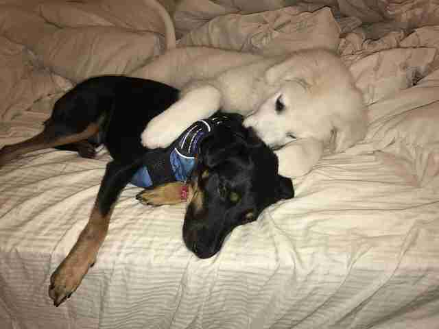 Dogs cuddling together on bed