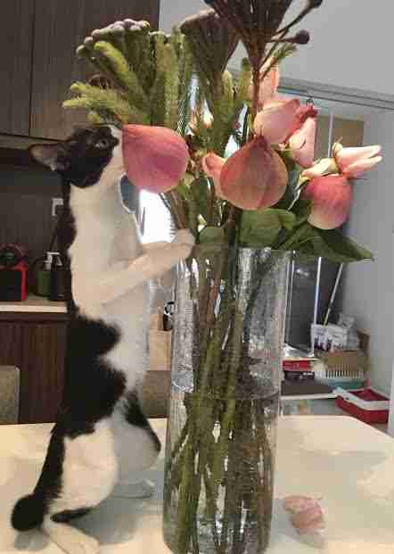 Cat sniffing flowers in vase