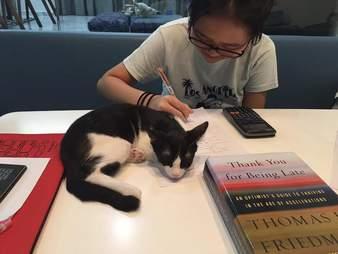Kitten lying on desk while girl works