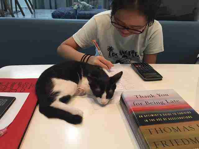 Kitten lying on desk while girl works