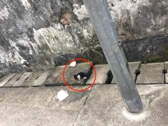 Tiny kitten standing near concrete drain