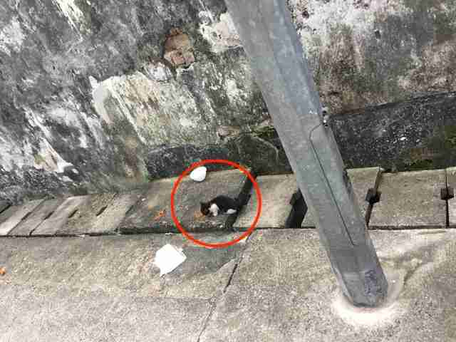Tiny kitten standing near concrete drain