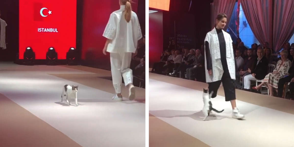 bc47eee641 Attention-Seeking Cat Invades Fashion Show In Turkey - The Dodo