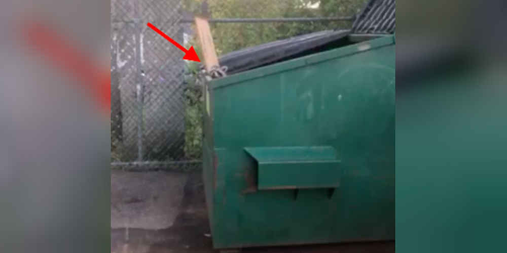 Raccoons Wait Patiently Every Morning Until Guy Lets Them Out Of Dumpster